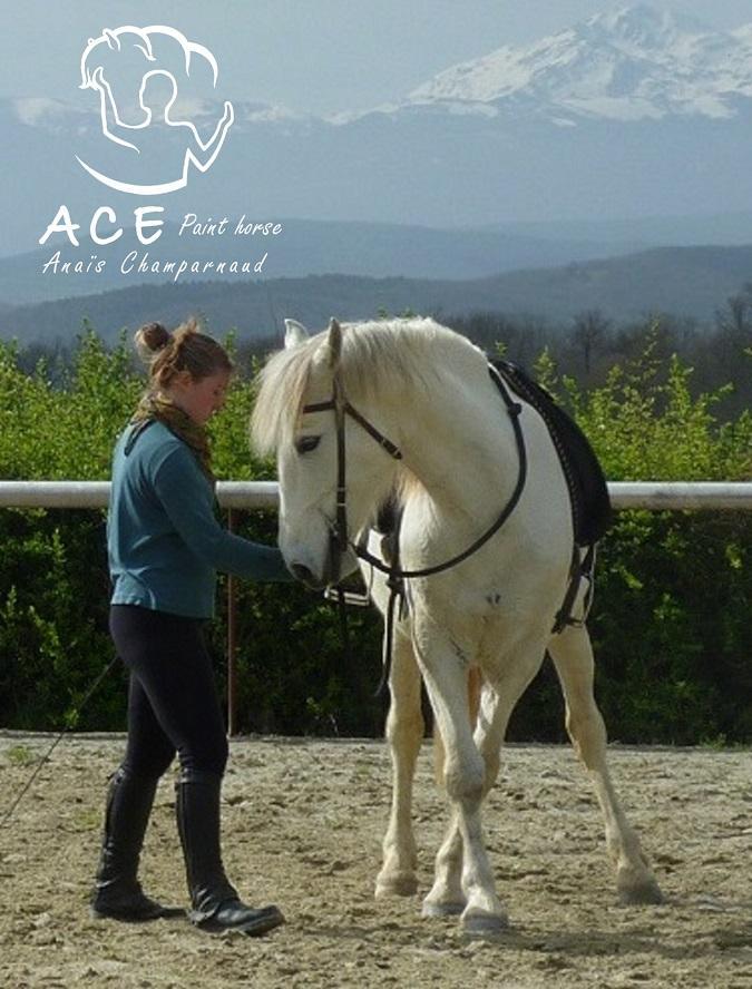 photo de ACE Paint Horse – équitation éthologique et Moutain Trail