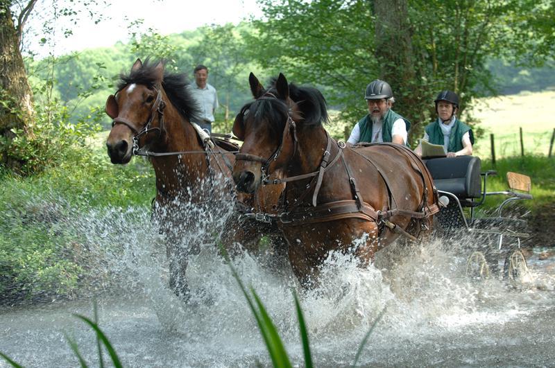 photo de Meneurs et Cavaliers Occitans